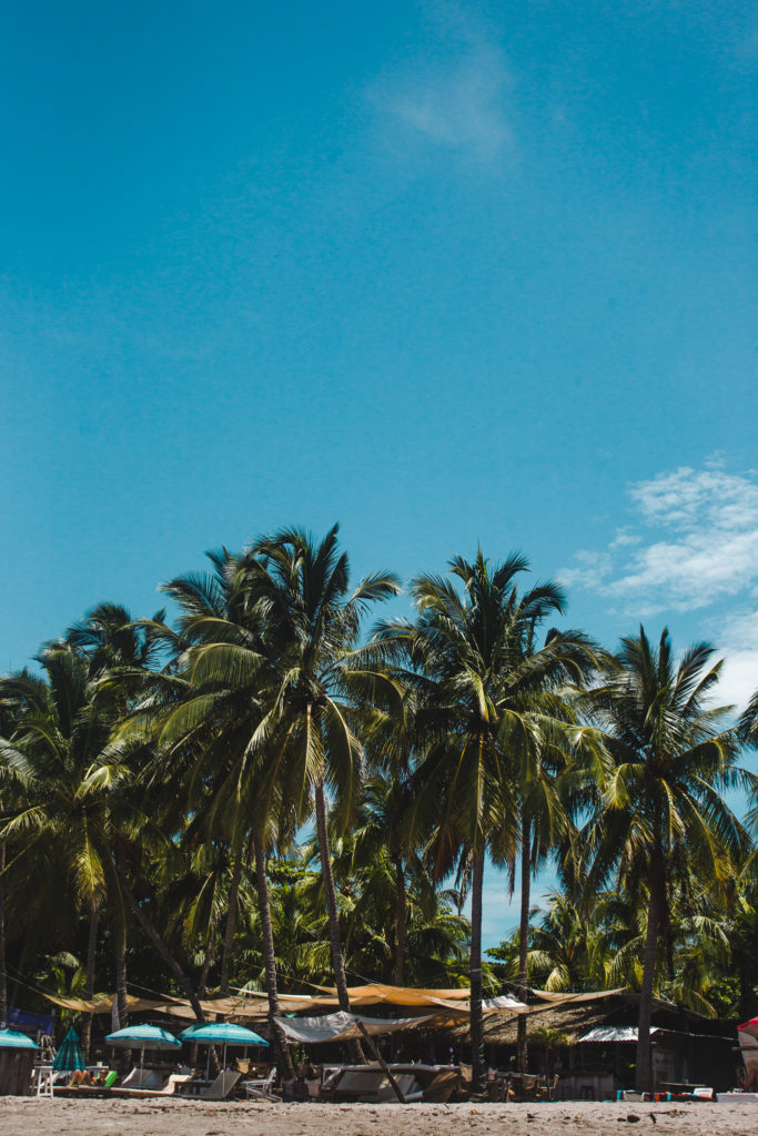 Costa Rica Samara palm trees which country to visit in Latin America