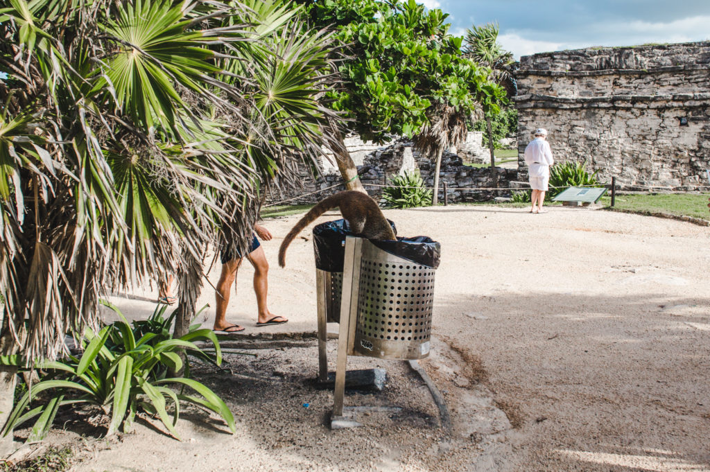 coatis how to see the tulum ruins and when's the best time to go | ancient mayan ruins tulum mexico